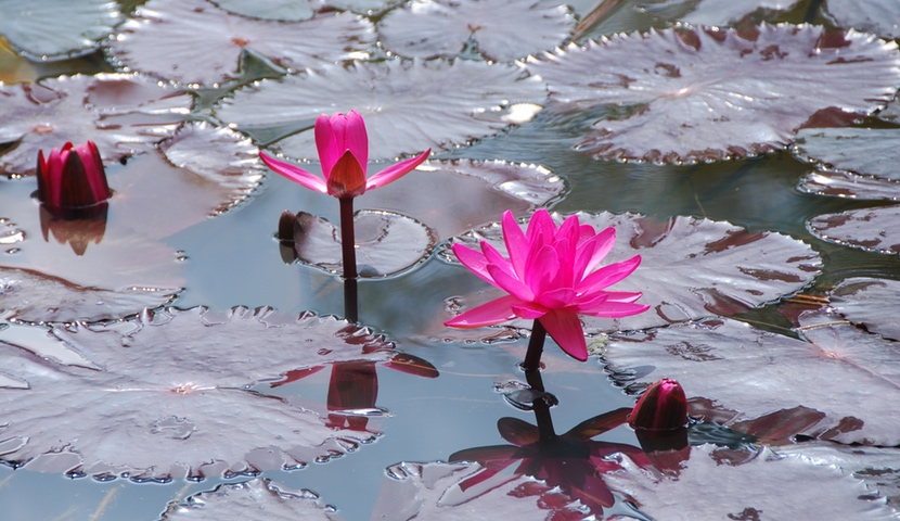 Water of Kindness – The Essential Ingredient for Happiness